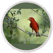 Male Summer Tanager Round Beach Towel