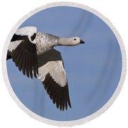 Male Upland Goose Round Beach Towel