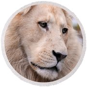 Male White Lion ... Thabo Round Beach Towel
