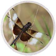 Male Widow Skimmer Dragonfly #3 Round Beach Towel