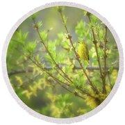 Male Yellow Warbler Round Beach Towel