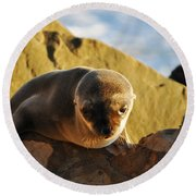 Malibu California Baby Sea Lion Round Beach Towel