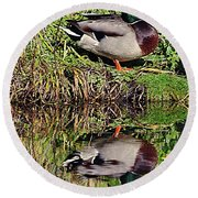 Mallard And Reflection Round Beach Towel