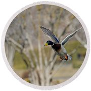 Mallard Approach Round Beach Towel