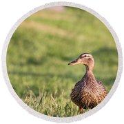 Mallard Duck Anas Platyrhynchos, Female Round Beach Towel