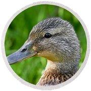 Mallard Duck Female Round Beach Towel