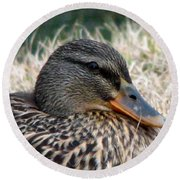 Mallard Female 2 Round Beach Towel