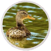 Mallard Or Wild Duck - Anas Platyrhynchos Round Beach Towel