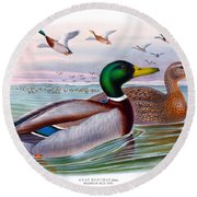 Mallard Or Wild Duck Antique Bird Print Joseph Wolf Birds Of Great Britain  Round Beach Towel