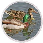 Mallard Pair Swimming, Waterfowl, Ducks Round Beach Towel