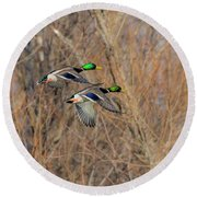 Mallard's In Flight Round Beach Towel