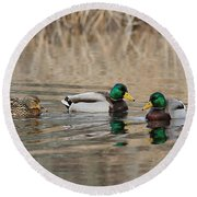 Mallards On The Pond Round Beach Towel