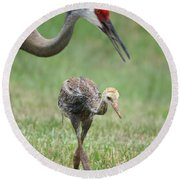 Mama And Juvenile Sandhill Crane Round Beach Towel by Carol Groenen