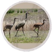 Mama And Two Juvenile Sandhill Cranes Round Beach Towel