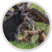 Mama Black Bear With Cinnamon Cubs Round Beach Towel