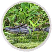 Mama Gator With Babies Round Beach Towel