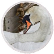 Mama Swan At Abbotsbury Round Beach Towel