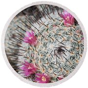 Mammillaria Cactus With Small Flowers Round Beach Towel