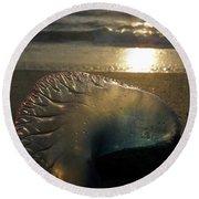 Man-o-war In Sunrise Round Beach Towel