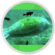 Manatee And Friends Viewed From Glass Bottom Boat At Silver Springs Round Beach Towel