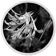 Mandarin Honeysuckle Vine 1 Black And White Round Beach Towel