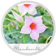 Mandevilla Pink Beauty Round Beach Towel