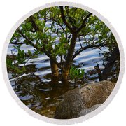 Mangroves And Coquina Round Beach Towel