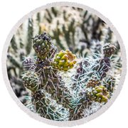 Many Stems Of Poky Small Cactus In Desert Round Beach Towel