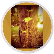 Maple Branch Growing From Trunk Round Beach Towel