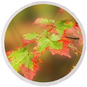Maple Leaves Changing Round Beach Towel