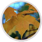 Maple Leaves In Autumn Round Beach Towel