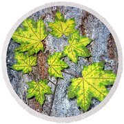 Maple Mania 12 Round Beach Towel