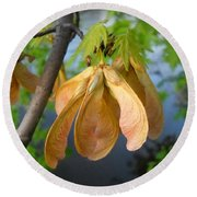 Maple Seeds In May Round Beach Towel