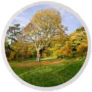 Maple Tree On The Slope. Round Beach Towel