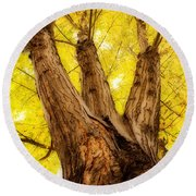 Maple Tree Portrait 2 Round Beach Towel