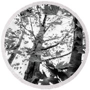 Maple Trees In Black And White Round Beach Towel