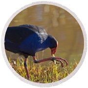March Of The Swamphen Round Beach Towel by Mike  Dawson