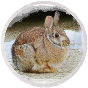 March Rabbit With Vignette Round Beach Towel