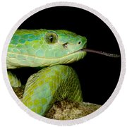 Marchs Palm Pitviper Round Beach Towel
