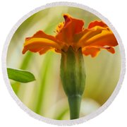 Marigold On A Lovely Spring Day Round Beach Towel