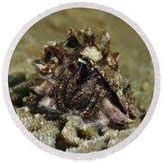 Marine Hermit Crab Round Beach Towel