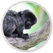 Marmoset Sitting Perched In A Tree Round Beach Towel