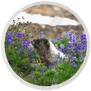 Marmot In The Wildflowers Round Beach Towel