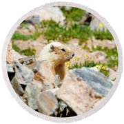 Marmot On Mount Massive Colorado Round Beach Towel