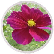 Maroon And Yellow Cosmos Round Beach Towel