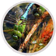 Married With Children Dragonflies Mating Round Beach Towel