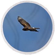 Marsh Hawk Square Format Round Beach Towel