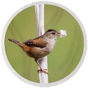 Marsh Wren Nest Building Round Beach Towel