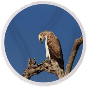 Martial Eagle Round Beach Towel