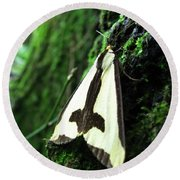Maryland Clymene Moth Round Beach Towel
